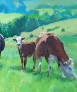 cows-web